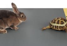 tort hare image
